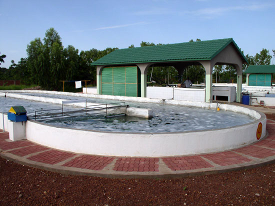 Une photo du bassin à spiruline