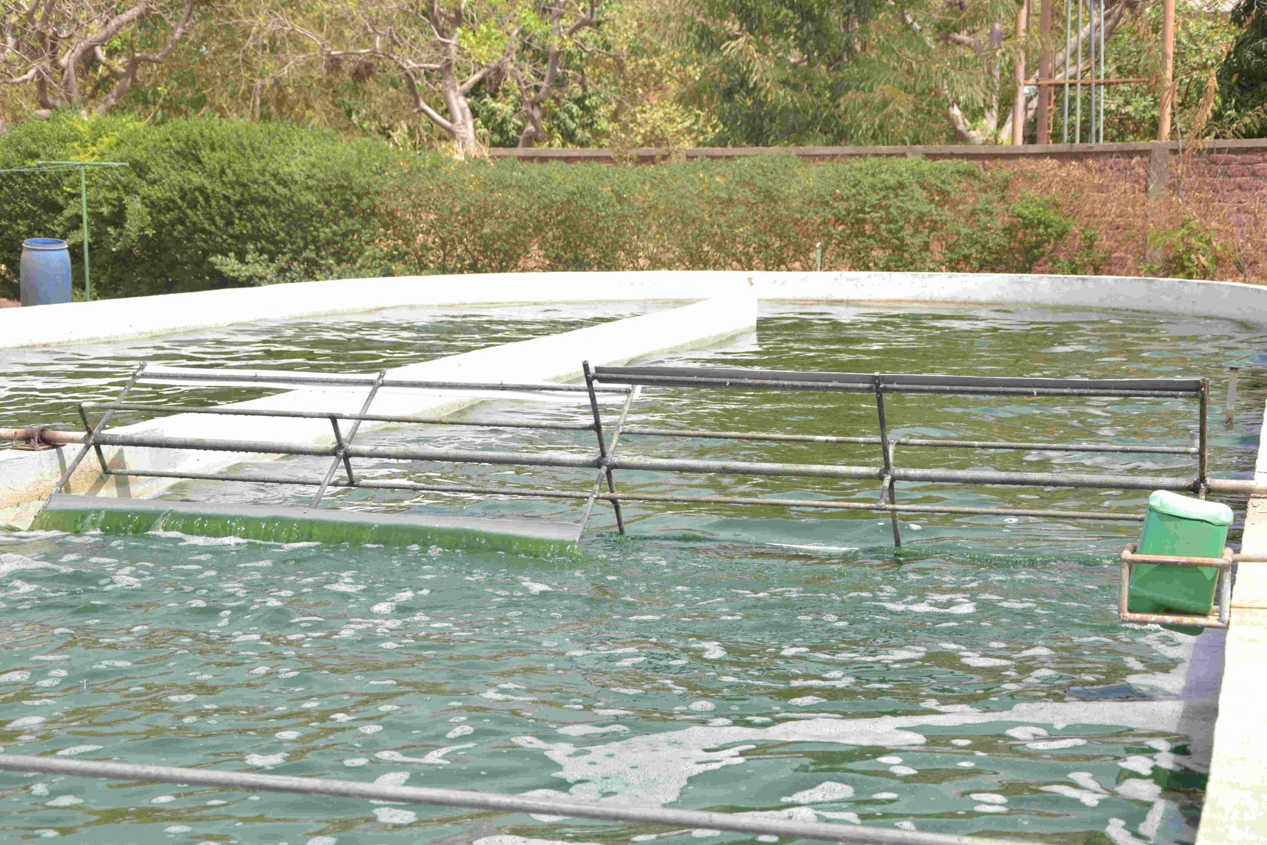 Photo d'un bassin à spiruline